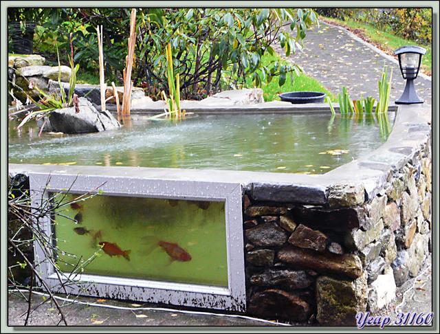 Blog de images-du-pays-des-ours : Images du Pays des Ours (et d'ailleurs ...), Heureux comme des poissons dans l'eau avec un temps à ne pas les mettre dehors! - Milhas - 31