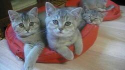 palettes de chatons