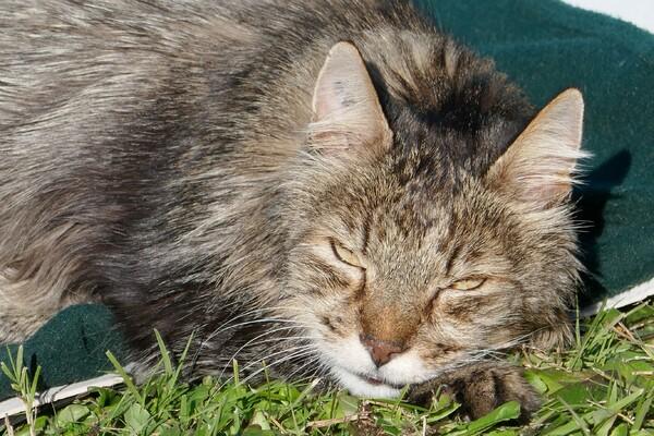 Abri-chat de jardin et nouvelles en vrac