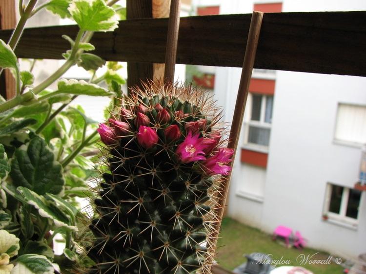 Trois générations de cactus