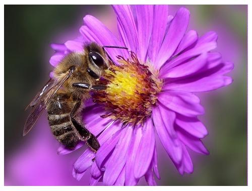 Faisons confiance aux abeilles