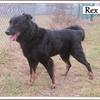 Rex B 3