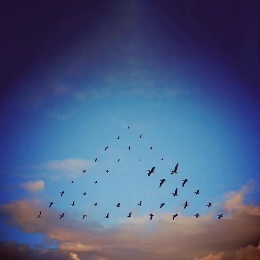 un ballet d'oiseaux