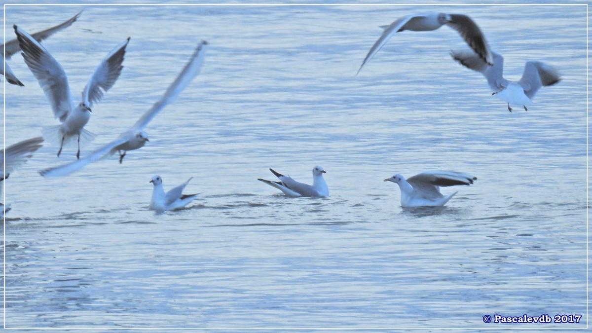 Entre le Port du Rocher et le Port de La Hume - Fin Janvier 2017 - 2/7