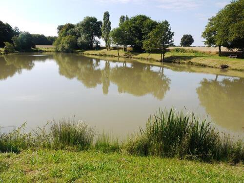 Le petit étang où se dandinent les canards