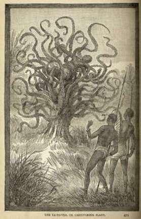 Ya-Te-Veo, l'arbre cannibale