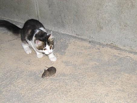 mes-animaux-de-compagnie-et-les-animaux-de-la-nature-6767.JPG
