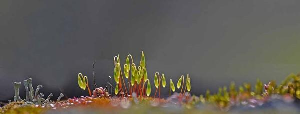 Mousse--lichens--sable roches 3868 modifié-1
