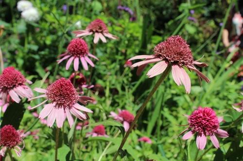 Fleurs de Chaumont