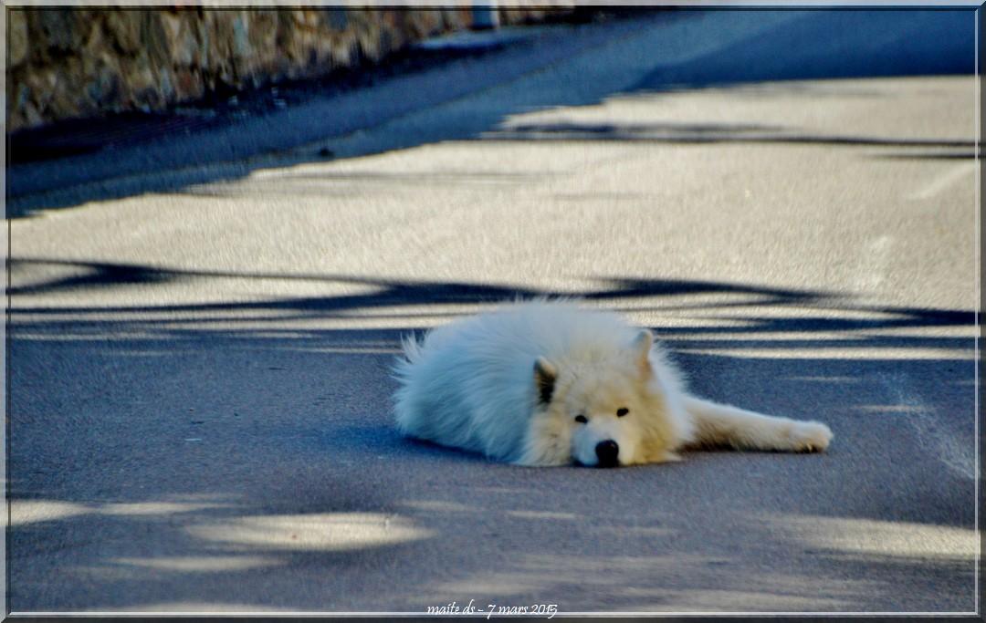 Heure de la sieste sur la route pour ce joli chien