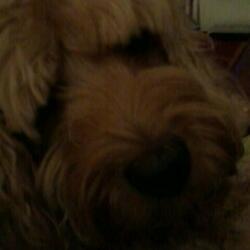 mon chien 2
