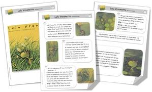 Adapter les supports écrits pour les élèves rencontrant des difficultés en lecture