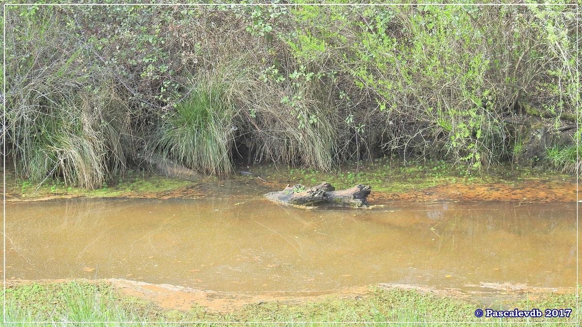 Balade au port du Rocher à Gujan Mestras en Mars 2017 - 3/10