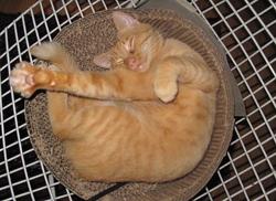 ADOPTEZ le p'tit PAVITRA, chat-chien, 2 ans tout juste (abandonné en fourrière!)