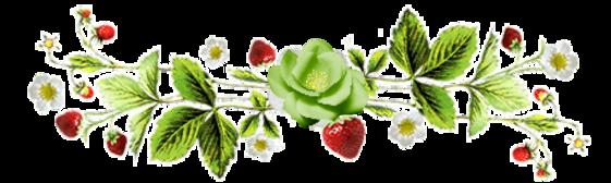 ♥ Le soleil et les roses ♥
