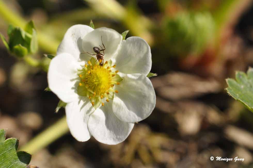 Sympathie entre une fleur et une fourmi.