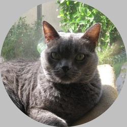Mon chat Forrest Gump