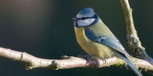 Nos oiseaux traumatisés. Agissons pour eux !