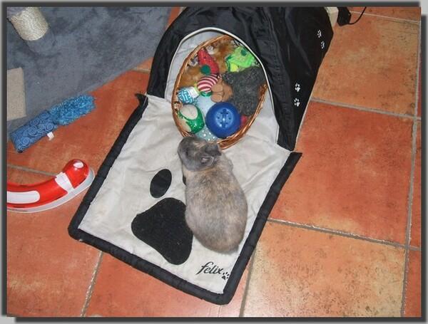 Le lapin qui se prend pour un chat ...