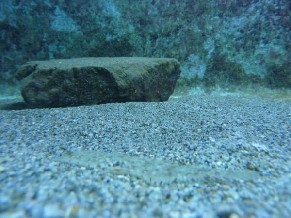 Banyuls---Aquarium-Un-Rhombou.JPG