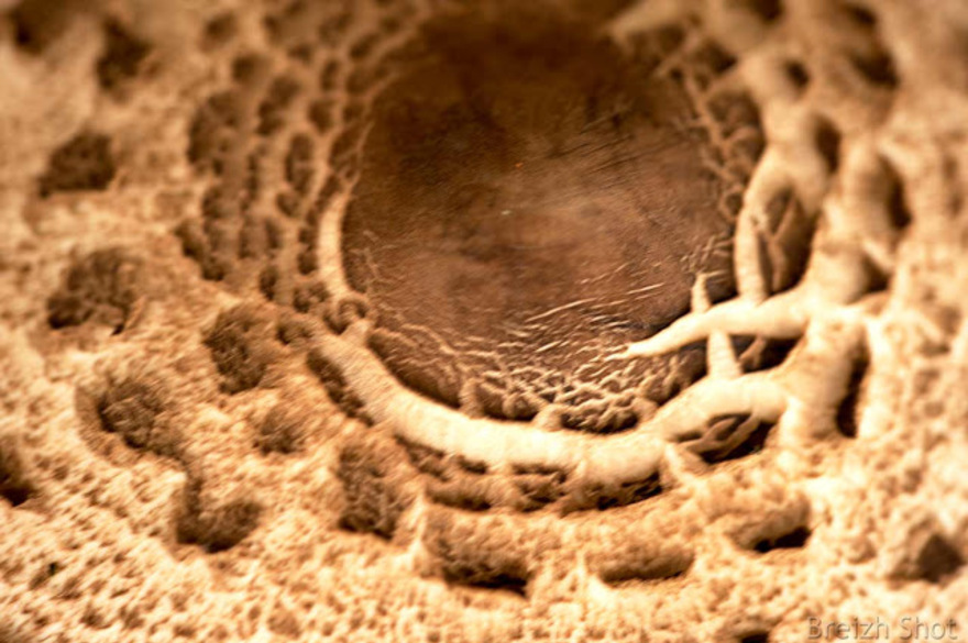 Coulemelle - lépiote élevée : Détail du chapeau