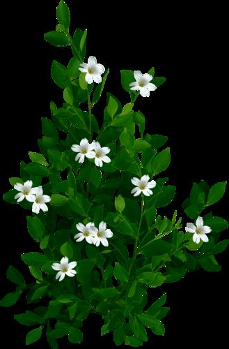 Verdure Série 8