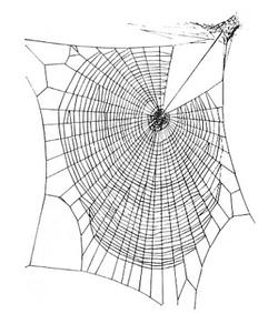 > Des toitures copiées sur les toiles d'araignées