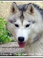 Nouchka (plus de 2 ans)
