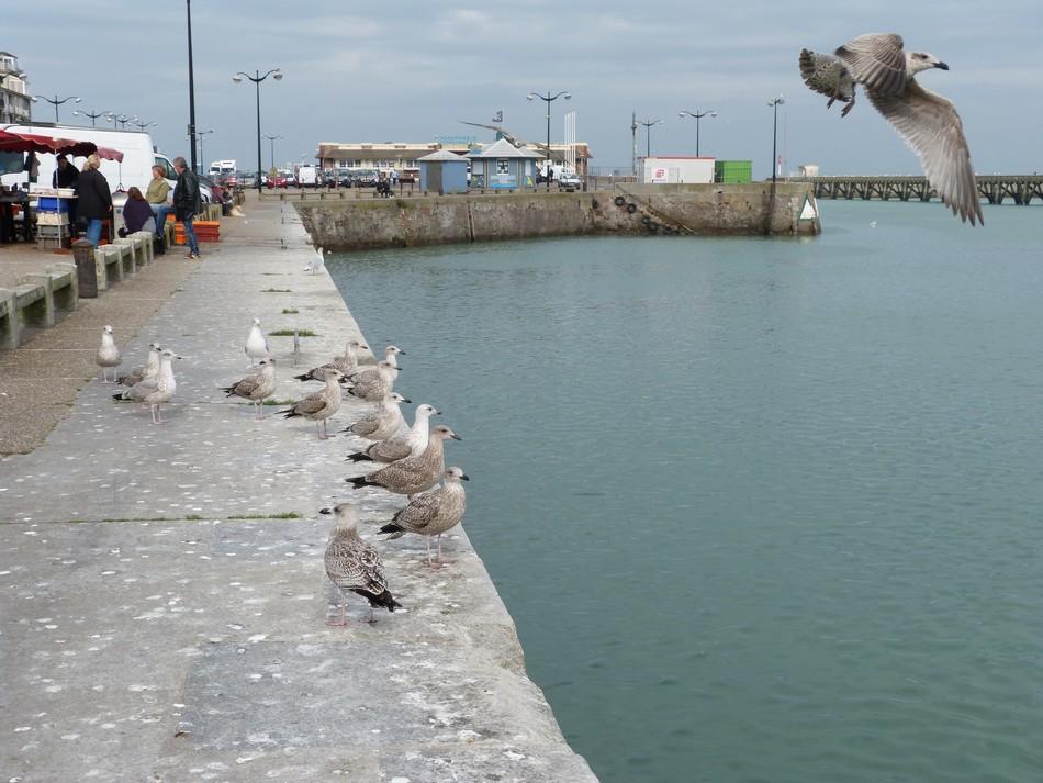 Voisine de Mers, Le Tréport