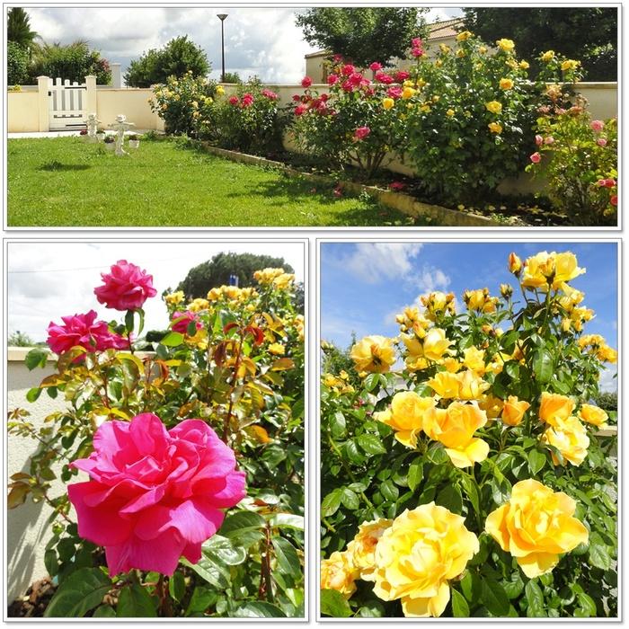 Jardin en habit d'été (1 sur 2)