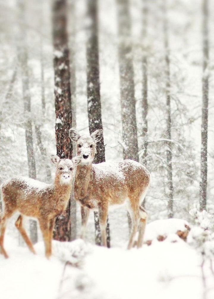 xx-animaux-dont-la-beaute-est-sublimee-par-les-couleurs-hivernales4