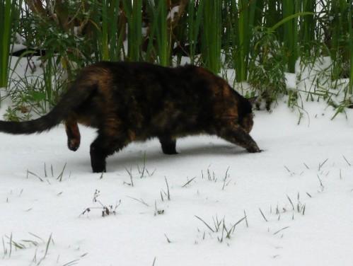 neige-chats_03.JPG