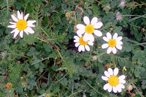 Des fleurs sauvages blanches