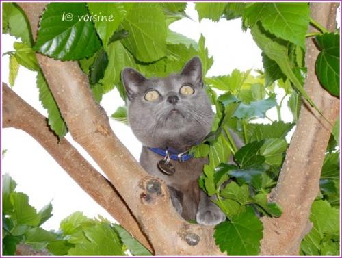 ok Le fameux arbre