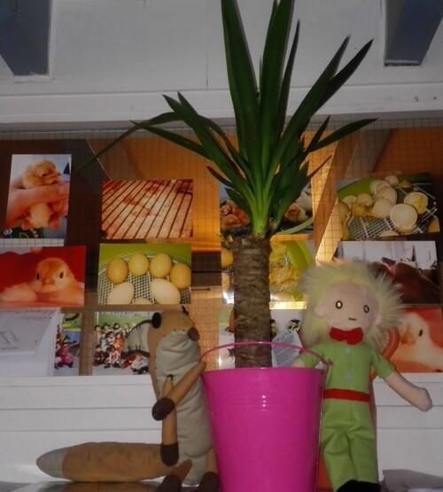 La plante du Petit Prince
