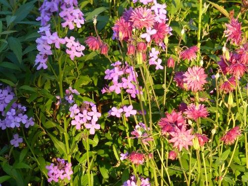 Des fleurs de mon jardin ou d'ailleurs.