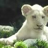 lion 10.jpg