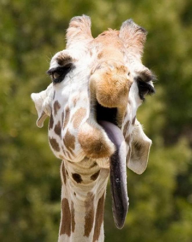 Articles/Photos sur les animaux - 3 - 24 images d'animaux faisant des grimaces