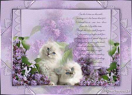 Deux Kitties