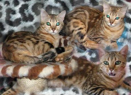 Mimionne8295753-bw-leopard-peau-arriere-plan-ou-la-texture-grande-resolution