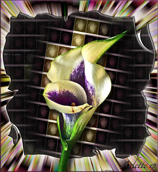 Fleurs diverses 4