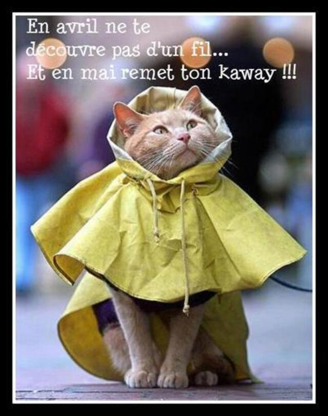 chat K way humour