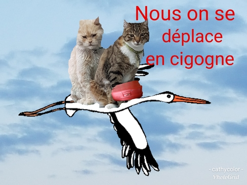 Les chats aux sports d'hiver, en route
