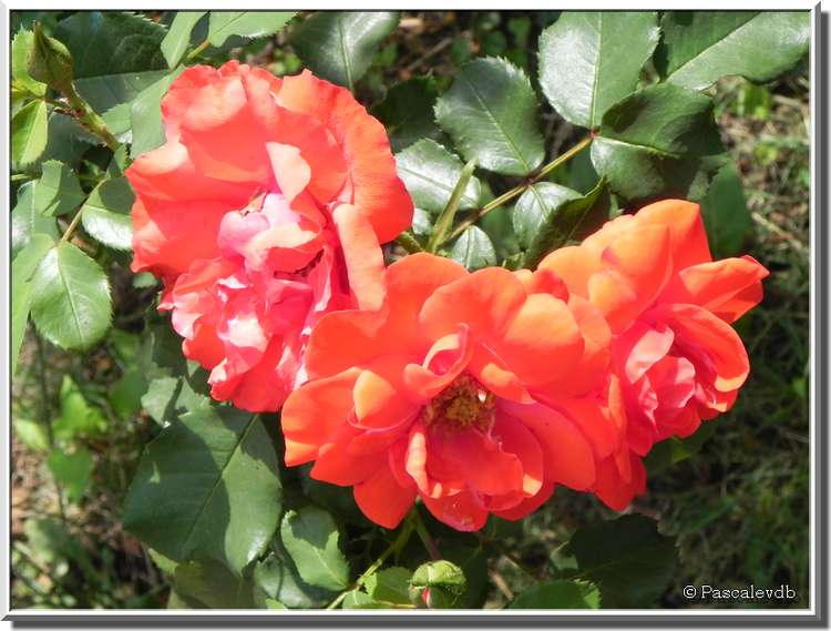 Fleurs de juillet dans les Landes