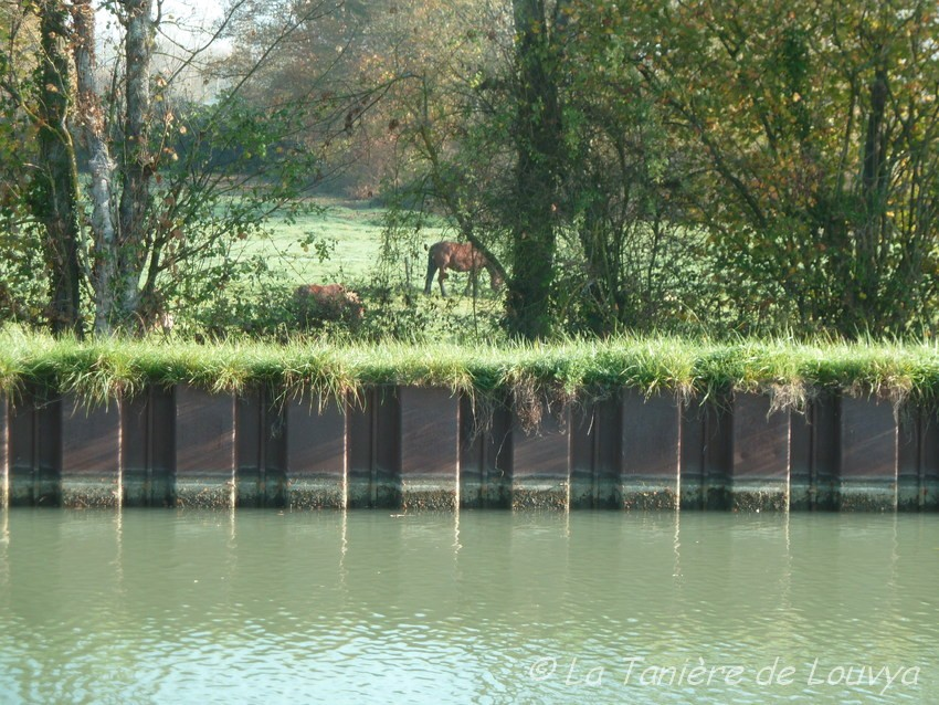 De beaux chevaux de l'autre côté
