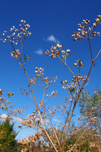 un ciel si bleu, des couleurs si éclatantes ... le champ des soeurs dans toute sa magnificence