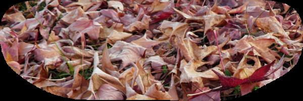 Tubes feuilles d'automne