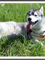 Lennox (13,5 mois)