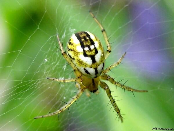 Araignées et leurs cousins