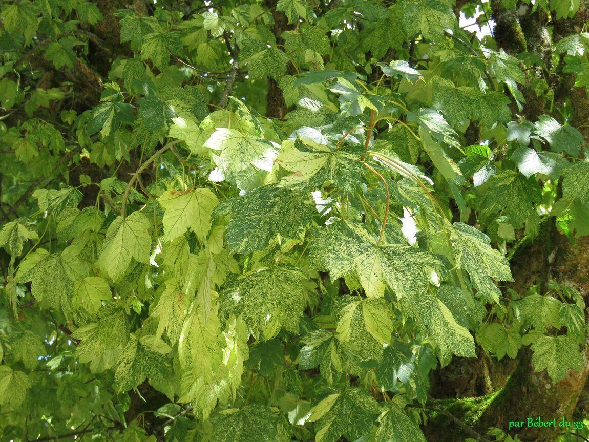 des feuilles en Juillet